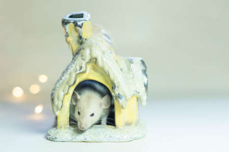 Symbol of New Year 2020 - white or metal (silver) rat mouse.Christmas card New Year 2020 .White mouse stands at 2020.