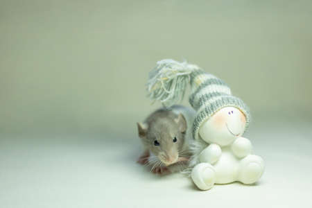 Cute pet rat sitting next to snowman. Decorative rat or mouse. Chinese symbol of new year 2020 and Christmas. The concept of holiday, fun. Charming pet.