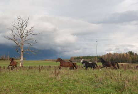 non urban scene: Horses in Field Stock Photo