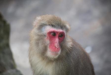 monkey zoo Africa mammal animal
