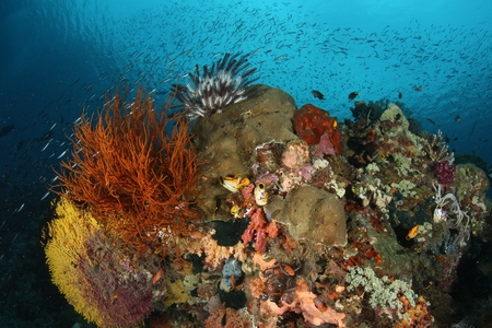 coral life diving Underwater Papua New Guinea Pacific Ocean