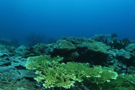 ocea: coral life diving Papua New Guinea Pacific Ocea