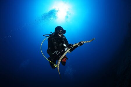 saltwater eel: diver with sea snake nderwater diving picture ocean