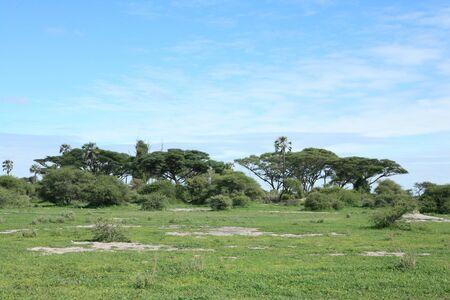 African savannah summer pictrures wild safari Tanzania Rwanda Botswana Kenya Stock Photo