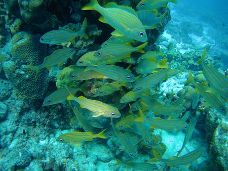 Bonaire island underwater diving