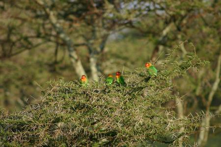 Wild African Bird  in African Botswana savannah