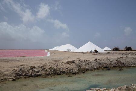 rose caribbean salt lake Bonaire island Caribbean Netherland Antilles