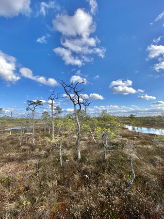 swamp autumn National Park Kemeri Latvia landscapes