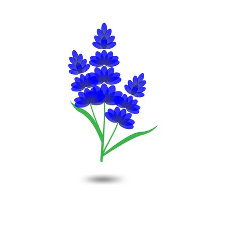 Lavender Logo icon vector template Banque d'images - 105505010