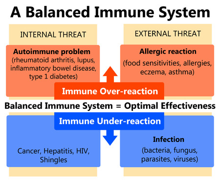 balanced immune system illustration Standard-Bild