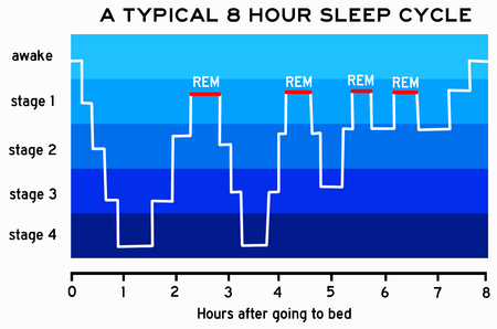 sleep cycle illustration 版權商用圖片
