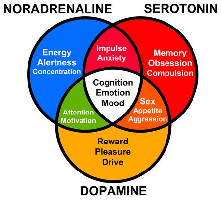 Hormone functions illustration