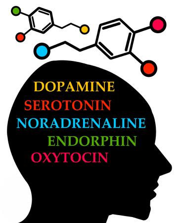 Brain hormones illustration