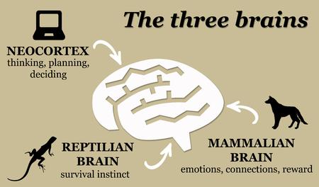Ilustración de cerebros