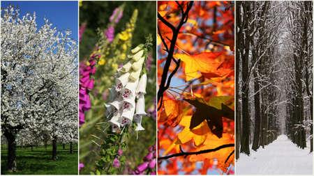 Four seasons Standard-Bild