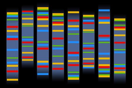 Chromosomes illustration