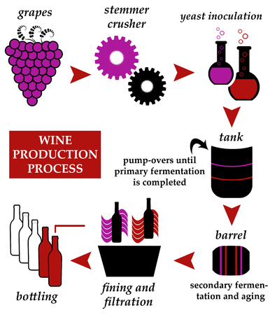 Wine production illustration