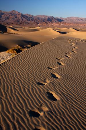 desert footsteps Stok Fotoğraf