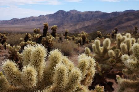 dry desert Stok Fotoğraf