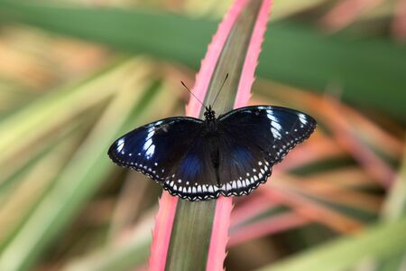 black white butterfly nature 版權商用圖片