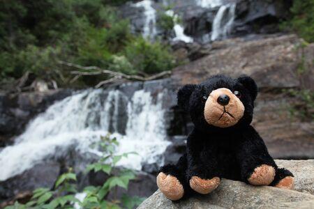 fluffy bear nature