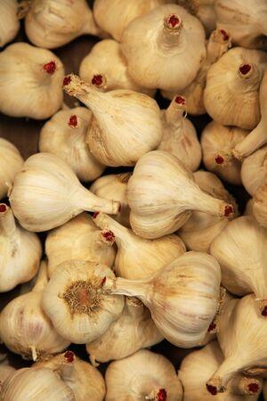 garlic 版權商用圖片
