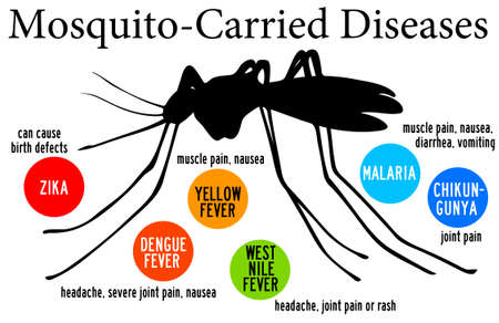 mosquito carried diseases illustration