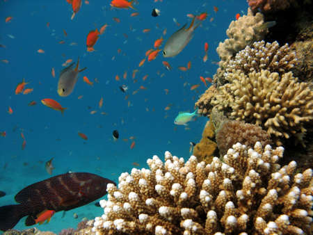 A photo of coral underwater Stock Photo - 796650