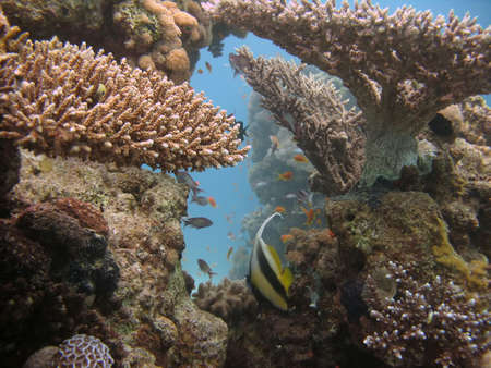 A beautiful picture of a coral reef teeming with life and bubbles in the background. shot in the Red Sea Stock Photo