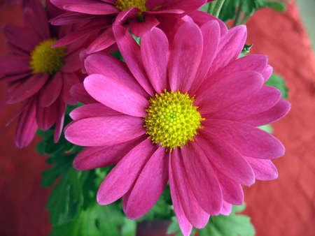 a pinkish violet flower