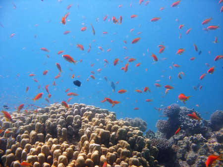A beautiful picture of a coral reef teeming with life. shot in the Red Sea Stock Photo
