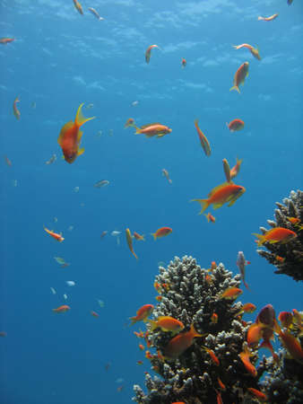 Coral Reef Scene with many fishes