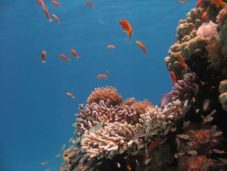 Coral Reef Scene with fishes Stock Photo