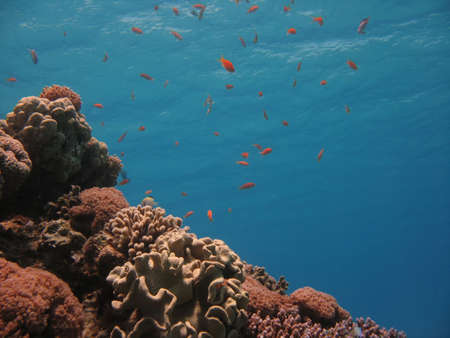 Coral Reef Scene on focus with many fishes photo