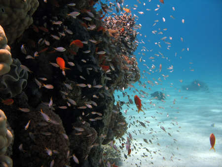 Coral Reef Scene with many fishes photo