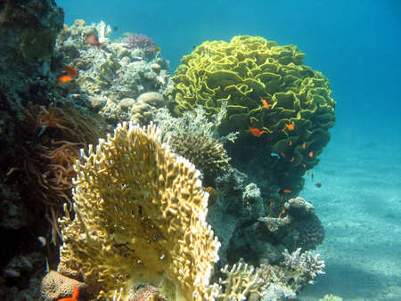 A picture of a coral reef. shot in the Red Sea Stock Photo - 1065455