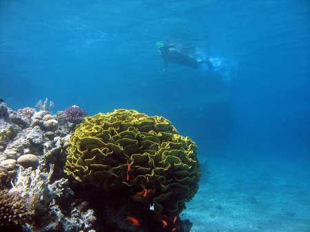 Snorkeler viewed from underwater
