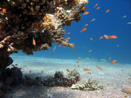 A picture of a coral reef teeming with life. shot in the Red Sea Stock Photo - 1065458