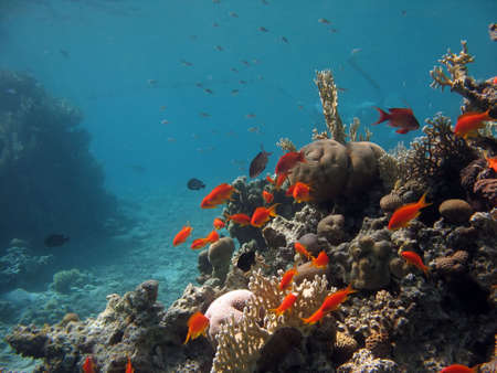 A picture of a coral reef teeming with life. shot in the Red Sea