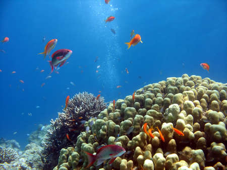 A picture of a coral reef. shot in the Red Sea Stock Photo - 1065468
