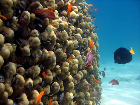 A picture of a coral reef. shot in the Red Sea Stock Photo - 1065472