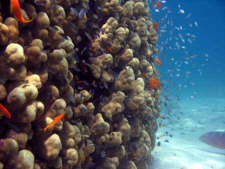 A picture of a coral reef. shot in the Red Sea Stock Photo - 1065473