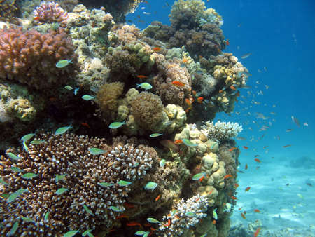 A picture of a coral reef. shot in the Red Sea Stock Photo - 1164468