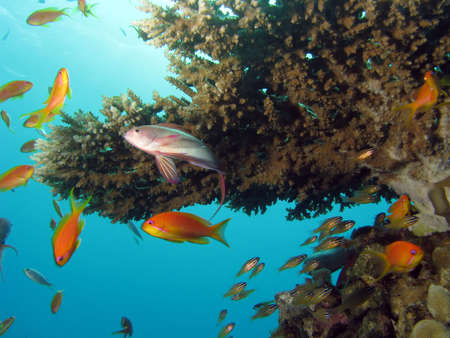 Coral Reef Scene with many fish