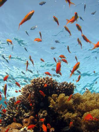Coral Scene. shot in the Red Sea 17122007 Stock Photo