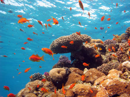Coral Scene. shot in the Red Sea 17122007 photo