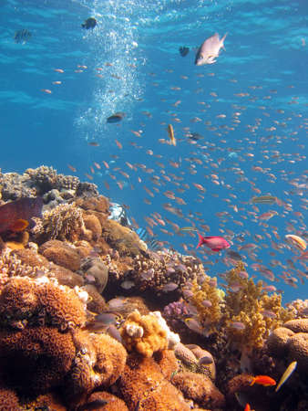 Coral Scene. shot in the Red Sea 17122007 Stock Photo