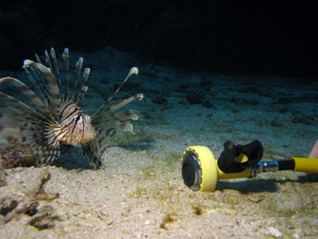 A lionfish looking at a scuba regulator