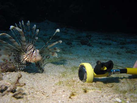 A lionfish looking at a scuba regulator