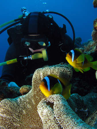 A diver looking at the clownfish in front of him.
